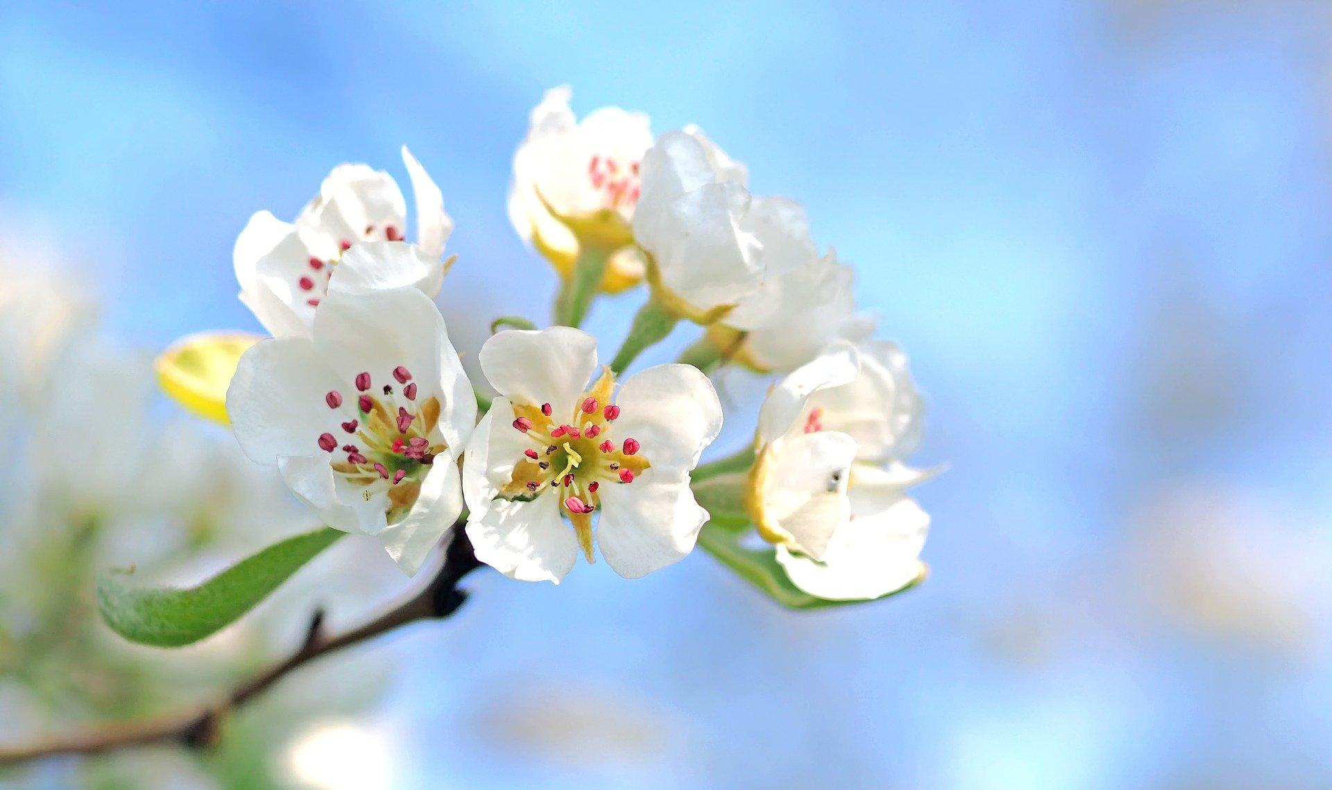 Wiosna w Kazimierzu Dolnym